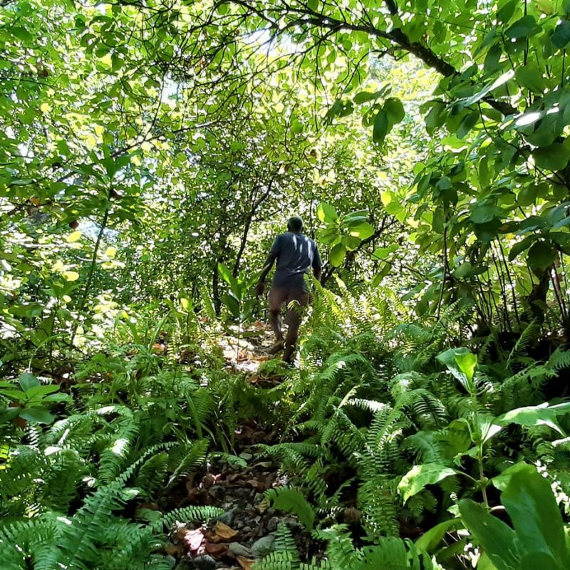 A guide Leading the way through a semi-trail into the jungle